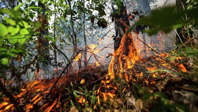 На Ямале ввели режим ЧС из-за природных пожаров