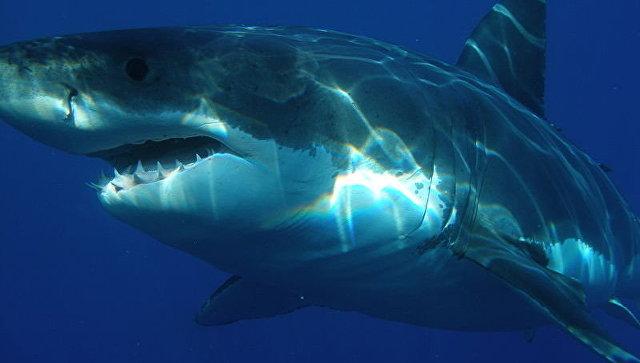 В ЮАР одноногий серфингист спас школьницу, на которую напала акула