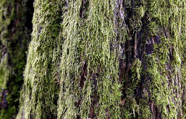 Ученые изучат распространение мхов на восточных склонах Полярного Урала в ЯНАО