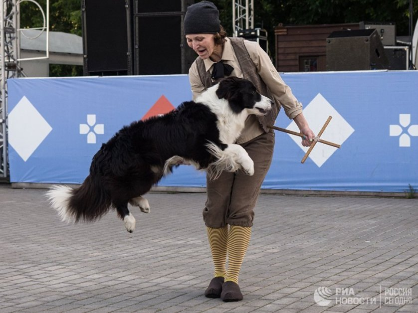В Измайловском парке были организованы шоу-программа собак-поводырей, лекции и мастер-классы ветеринаров и грумеров.