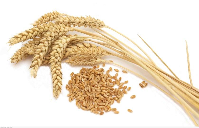 جنين القمح… من أفضل الحبوب للتنحيف!