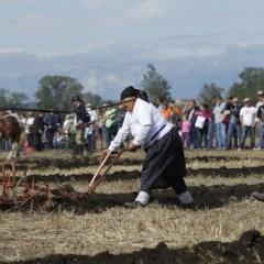 Эксперт: Сельское хозяйство Хорватии надо поддерживать, но не пошлинами