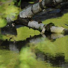 В Московской области создали шесть новых природных заповедников