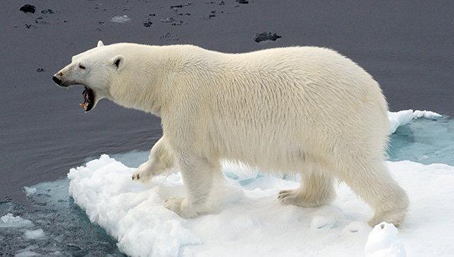 Генпрокуратура назвала охрану арктической зоны одним своих из приоритетов