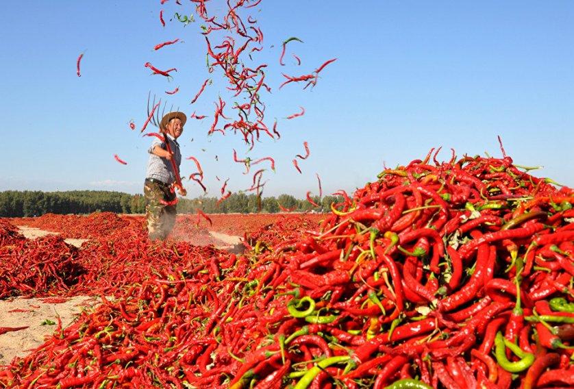 Мужчина раскидывает красный перец чили для просушки в деревне Чжанье, китайская провинция Ганьсу.
