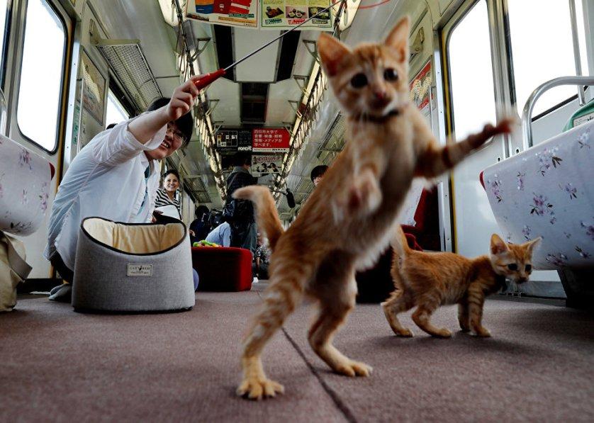 Пассажиры специального котопоезда, который появился в городе Огаки, Япония.