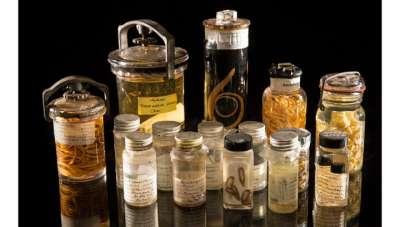 Образцы из Национальной коллекции паразитов США. Всего в ней насчитывается более 20 миллионов образцов.