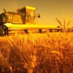 Об экспорте зерна и продуктов его переработки через пункты пропуска Краснодарского края за прошедшую неделю