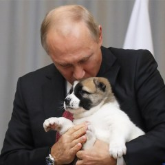 Лидер Туркмении подарил Путину щенка алабая по кличке Верный