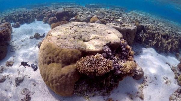 الشعاب المرجانية في خطر بسبب تزايد التيارات الساخنة تحت الماء