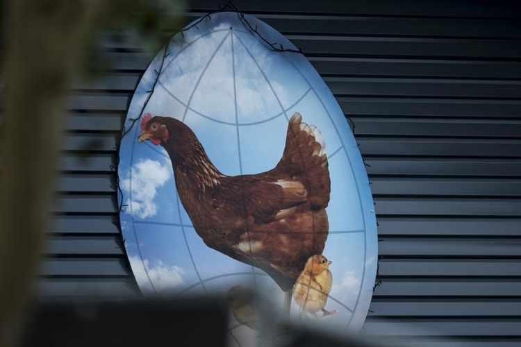 منظمة الصحة الحيوانية: إيران ترصد تفشيا لإنفلونزا الطيور في شمال البلاد