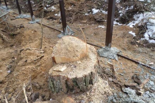 Любимов прокомментировал появление строительного забора в солотчинском лесу