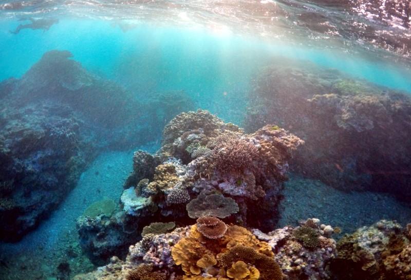 استراليا تعلن تمويلا حجمه 379 مليون دولار للحاجز المرجاني العظيم