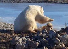 Гладящий собаку белый медведь растрогал почти 4 млн пользователей Сети