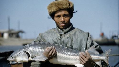 Как добывали советскую черную икру — лучшую черную икру в мире