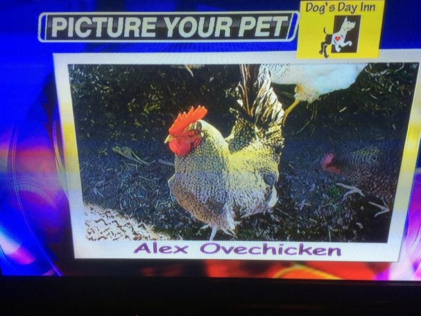 alex-ovechicken