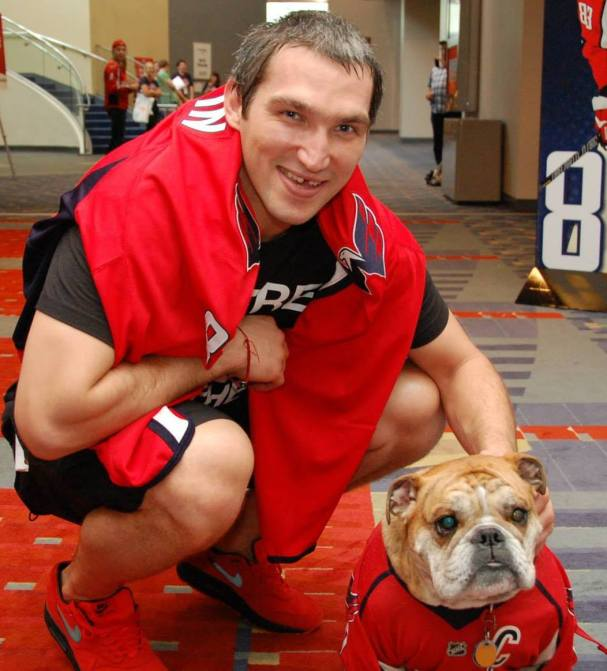 alex-ovechkin-ovie-the-bulldog