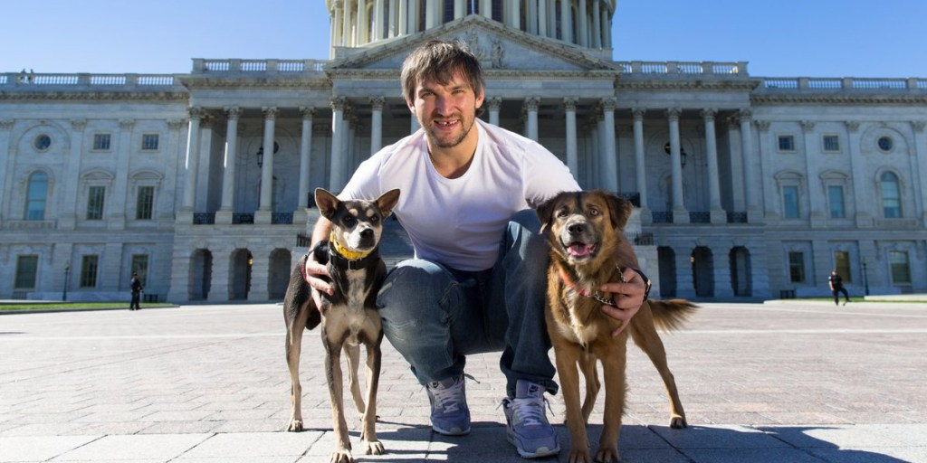 the caps canine calendar is back will be available for purchase november 24
