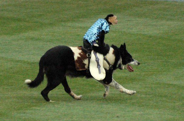 cowboy-monkey-rodeo3