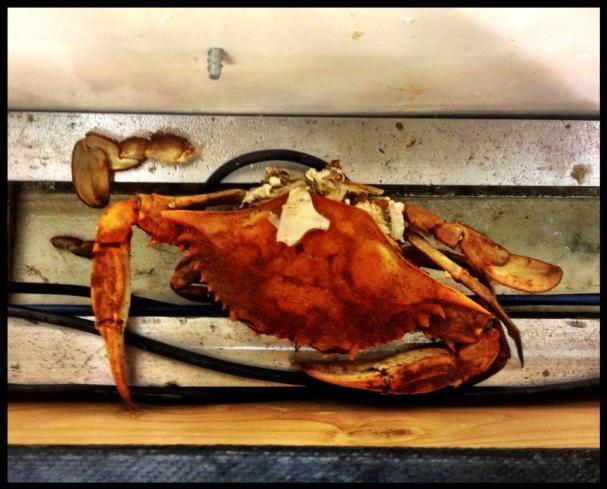 crab via wes