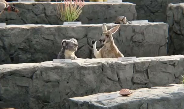 kangaroo-first-draft-ever
