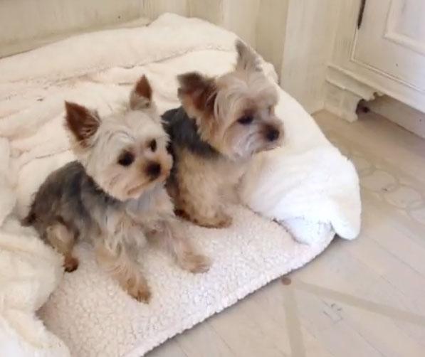 leonsis-dogs