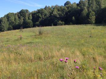 A Field in Russia. Summer.