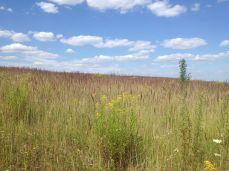 Field in Russia. Summer.