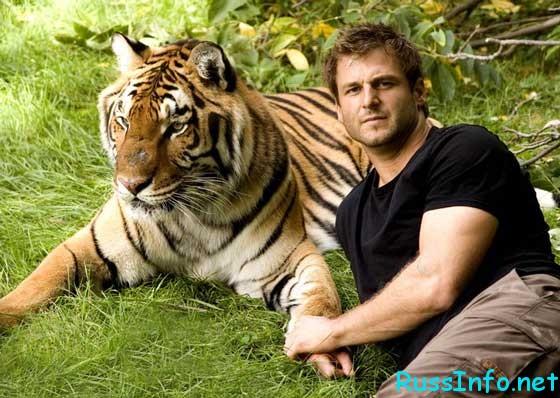 piulița de tigru ajută să piardă în greutate