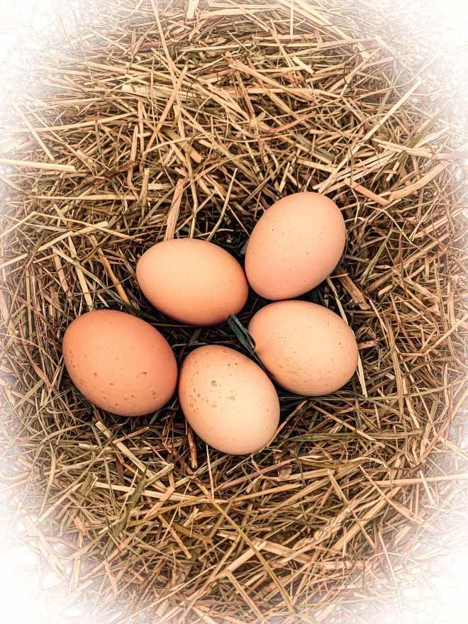 uova ingredienti federica russo pasticceria galline