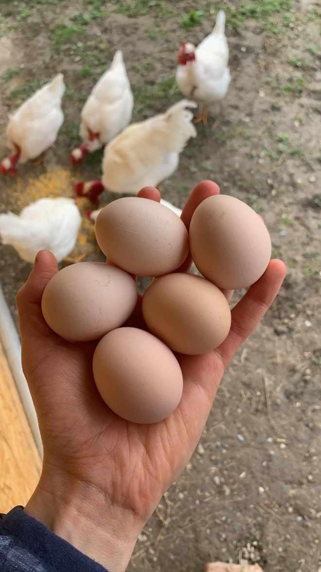uova galline federica russo articolo blog ingredienti