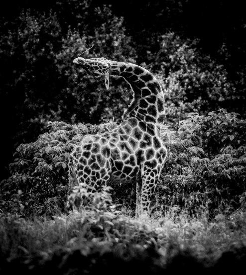 Laurent Baheux Nadia Audigie Photography (14)