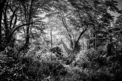 Laurent Baheux Nadia Audigie Photography (15)