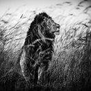 Laurent Baheux Nadia Audigie Photography (16)