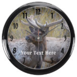 Rocky Mountain National Park Wildlife Animal Elk Aqua Clocks