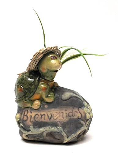 VoojoStore Pottery Turtle Bienvenidos – Perfect Gift For Men Women Couples Grandpa Father Mother Engagement Wedding Anniversary Christmas Birthday Him Her Sister Wife Husband