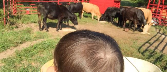 Summertime Memories On The Farm