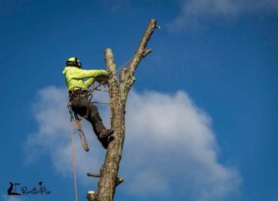 Arborist Tree Cutter