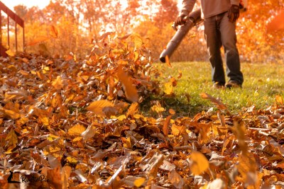 Leafblower clearing crispy golden leaves off lawn