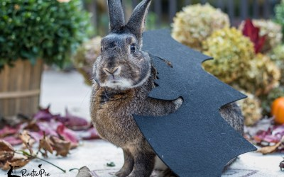 Eleven Tips to Take the Best Photos of your Pets in Costumes this Halloween