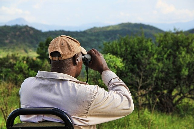 safari watch