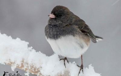 Seven Ways to Help Backyard Birds in the Winter