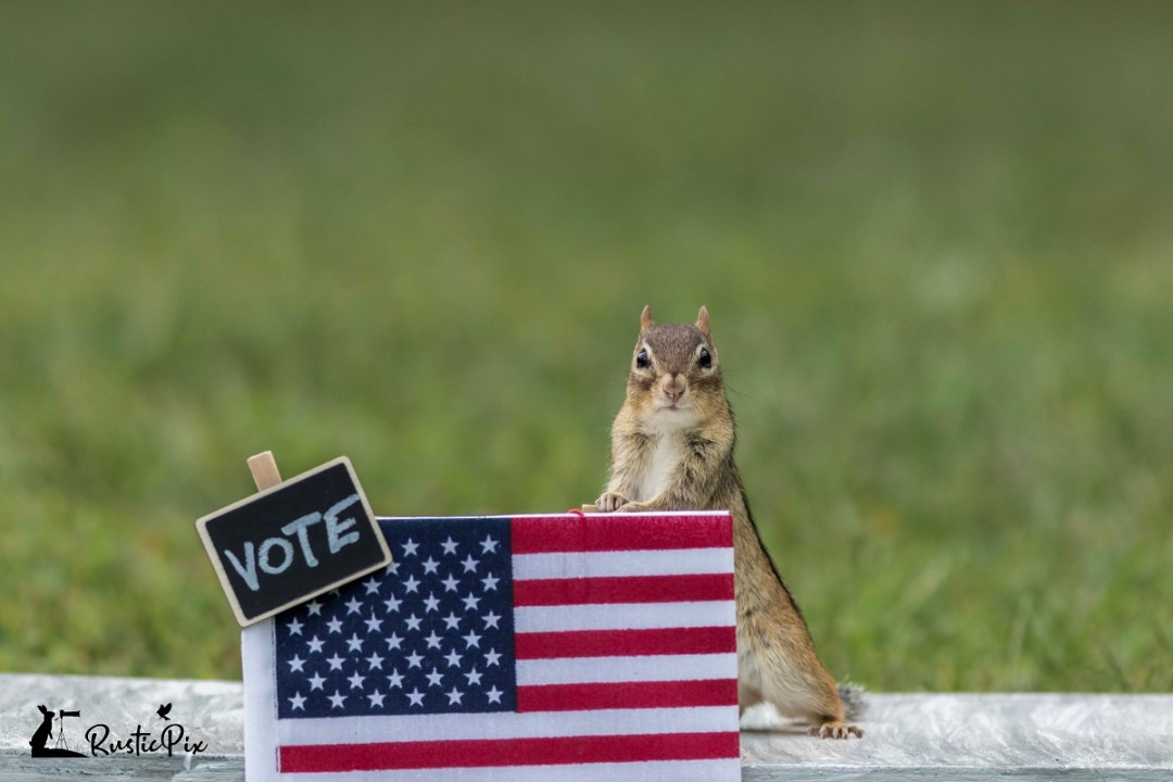 chipmunk vote