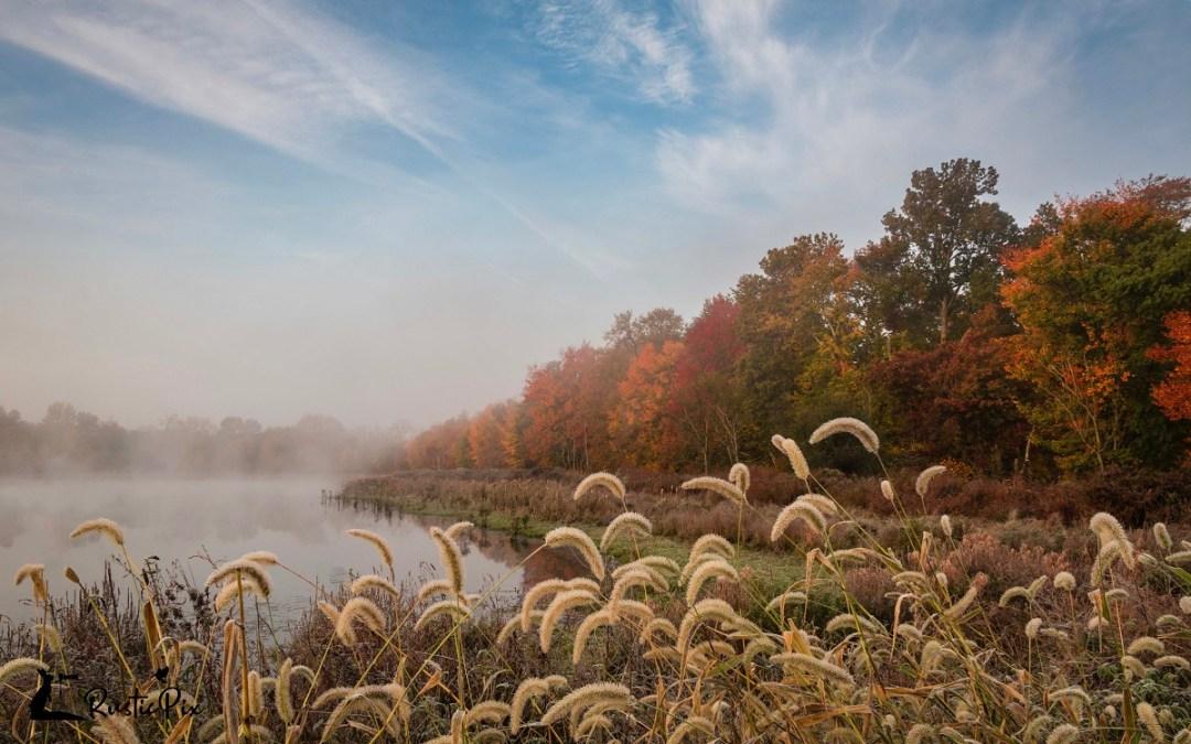 refuge fog fall