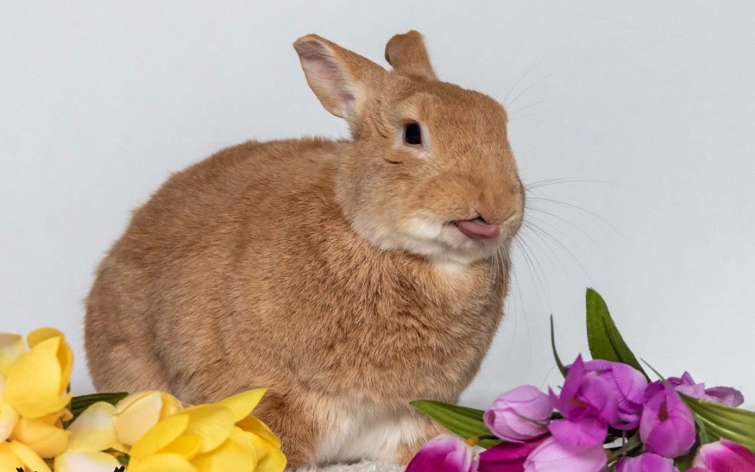 Pet Rabbit Photo Bloopers