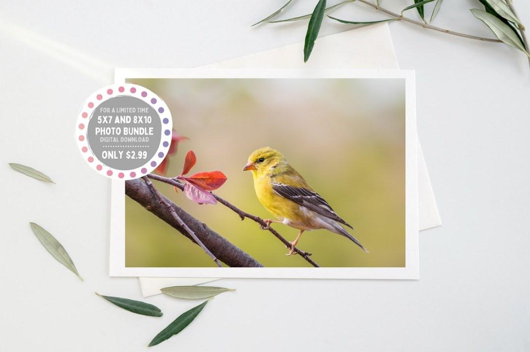 goldfinch etsy