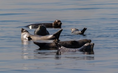 Harbor Seals in New Jersey – Nine Things to Know
