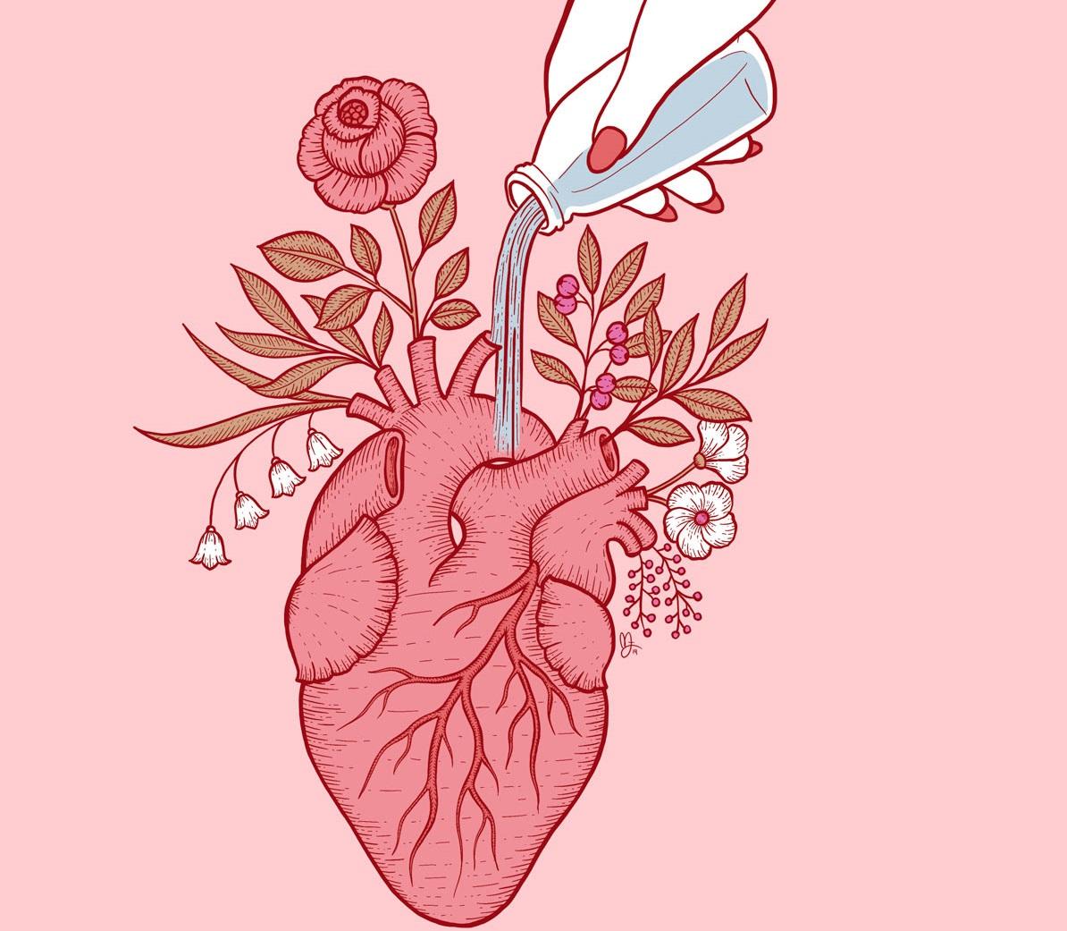 трансплантация сердце перфузия картинка