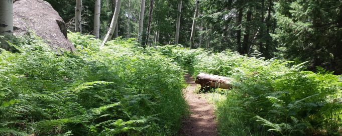 Kachina Trail. Flagstaff, AZ.