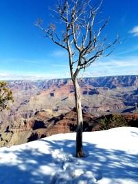 Grand Canyon, Arizona Winter in the Snow